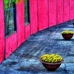 Цветотерапия за здраве и настроение