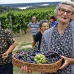 Работа след пенсия носи здраве