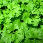 Зеленчуци, полезни за артериите