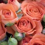 Ухание от рози помага за отслабване
