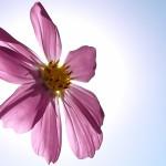 Хормоните и пролетта