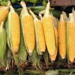 Депутати предлагат етикети да ни пазят от храните с ГМО