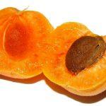 Полезни плодове и зеленчуци за жегите