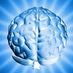 Човешкият мозък най-добър на 40-60 години