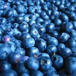 Боровинки срещу атеросклероза