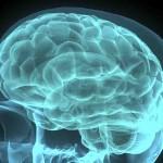 Ген Sox9 може да помогне при лечение на мозъка