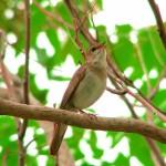 Чуруликане и песни на пойни птици срещу зимна меланхолия