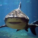 Откриха антибиотик от акула с революционно широк спектър
