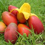 Прекаляване с витамин Е увеличава риска от рак на простатата