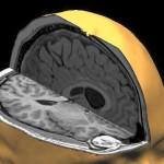 Учени: Човешкият мозък не старее