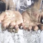 75% от децата не си мият ръцете редовно