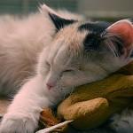 Котешко мъркане помага за добър сън