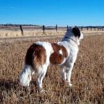 България е №1 по кучешка тения в ЕС