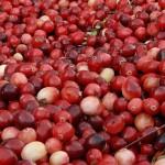 Червени боровинки за силен имунитет