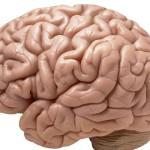 Мозъците на мъжете и жените са различни