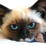 Ухапване от котка е опасно за здравето