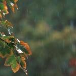 Песни за дъжд
