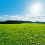 Български песни за любимото лято