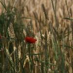Още български песни за любимото лято