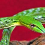 Отрова от змия, скорпион и пчела срещу рак