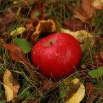 Български песни за златна есен