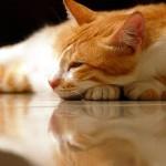 Лечебната сила на котката