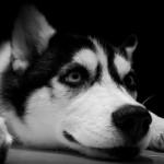 Кучето разпознава човешките емоции