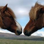 Музикални клипове с красиви коне