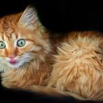 Музикални клипове с котки