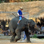 И слонове играят футбол