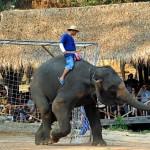 И слонове играт футбол