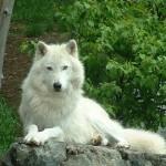 Кроманьонецът победил неандерталеца в съюз с вълка