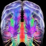 Мозъкът е свързан с имунната система