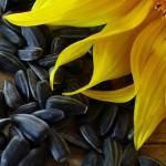 Естествени източници на витамин Е