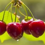 Полезните вишни