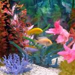 Защо съзерцаването на аквариум е полезно?