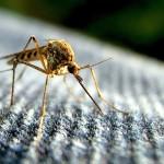Край на комарите с билки
