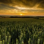 Шотландия се прочиства от ГМО