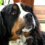 Кучето разбира човешките емоции