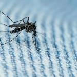 Вирусът Зика се предава и по полов път