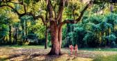деца в парк