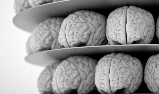 мозъци