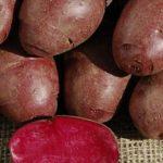 Създадоха здравословни червено-лилави картофи