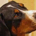 Учени: Кучето разбира какво му се говори