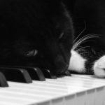 Композираха музика за котки