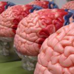 Човешкият мозък произвежда захар