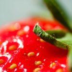 СЗО: Ягодите са най-замърсени с пестициди