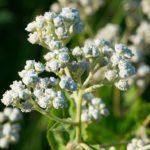 Над 28 000 растения са с приложение в медицината