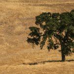 Как да си пазим здравето в летните горещини?