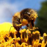 Колко е опасен инсектицида фипронил в храните?